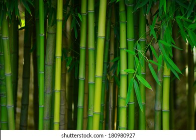 green bamboo tree in a garden