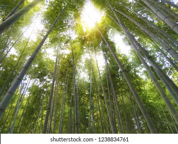 Green bamboo tree with sunlight is blurred background at the morning in Japan.can be used montage for your product or graphic design wallpaper.free space for text.