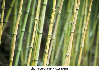 Green bamboo trunks, background photo with selective focus
