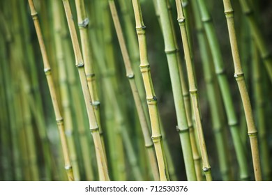 Green bamboo trunks, natural background photo with selective focus