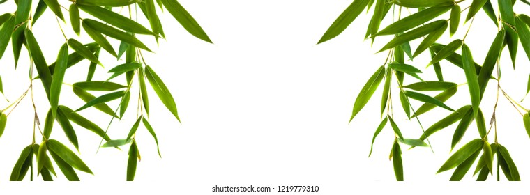 Green bamboo twigs with leaves isolated on the white background with copy space