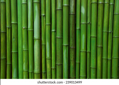 Green Bamboo Images, Stock Photos & Vectors | Shutterstock