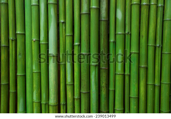 Green Bamboo Wall Stock Photo (Edit Now) 239013499