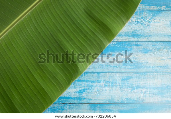 Green banana leaves on a blue Rustic Background.