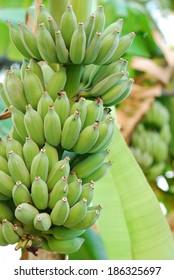 green banana in thailand