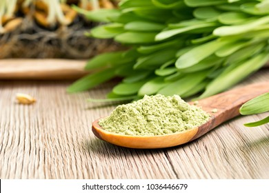 Green barley grass powder on a spoon, with fresh barley grass in the background