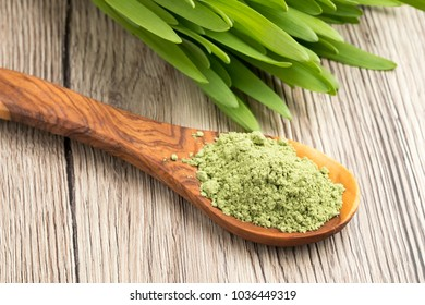 Green barley grass powder on a spoon with fresh young barley grass