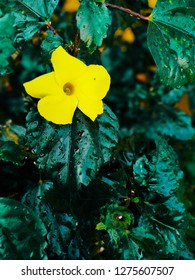 green based yellow flower. clean and attractive background wallpapper