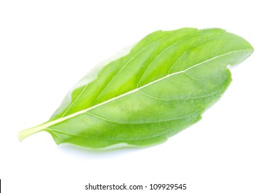 Green basil leaf isolated on white