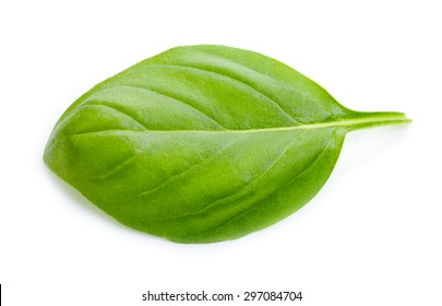 green basil leaf isolated on white background