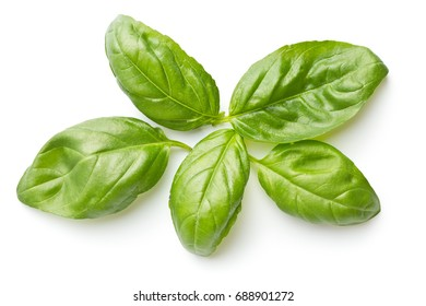 Green basil leaves isolated on white background. Top view.