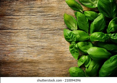green Basil on a dark wood background. toning. selective focus on the middle left leaf Basil