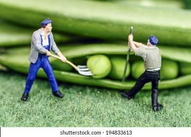 Green bean farmer miniature toy figure