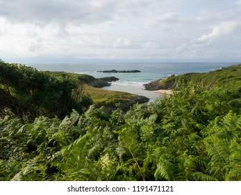 green beautiful landscape beach