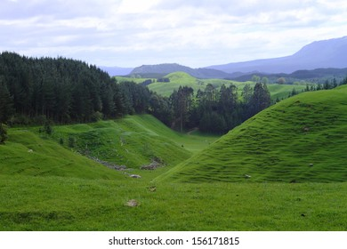 Green beautiful meadows with rolling hills in Rotorua, New Zealand