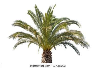 Palm Beach zahrady datování