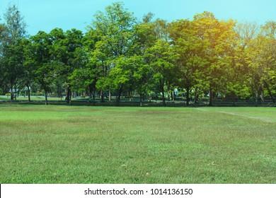 Green beautiful park