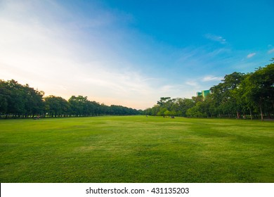 Green beautiful park and blue sky in evening