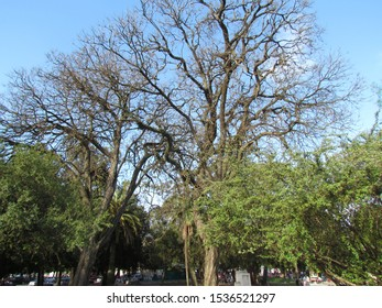 Green begins to impose on trees because it is already spring. Notice the fractal shape of the branches.