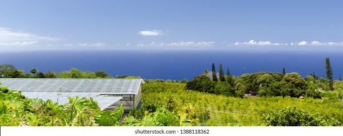 Green belt of cofee plantations on hills over Kona, Big Island, Hawaii