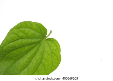 Green betel leaf heart shape  white background used to make traditional medicines