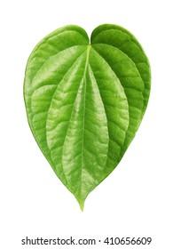 Green betel leaf heart shape isolated on white background