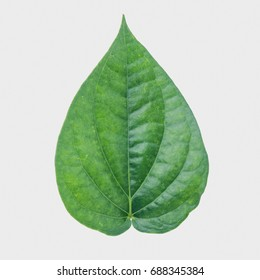 Green betel leaf isolated on the gray background with clipping path.