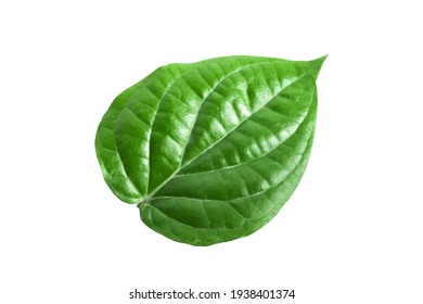 Green betel leaves isolated on white background,clipping path