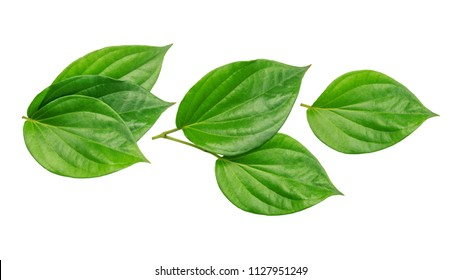 Green betel piper leaf on a white background.
