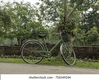 Green bicycle parked next to a tree in the garden.