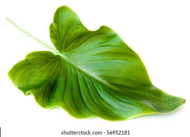 green big leaf isolated on white background