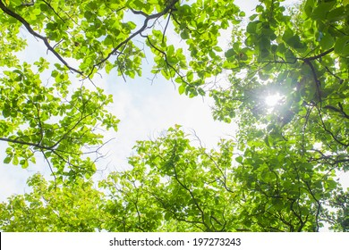 green big trees park with sunny