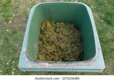 A green bio bin with freshly mown grass clippings