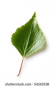 green birch leaf isolated on a white background