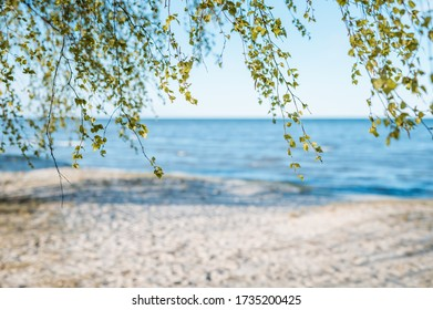 Green birch leaves hanging in the air with exotic sea in background. Beach in Europe with blurred background.