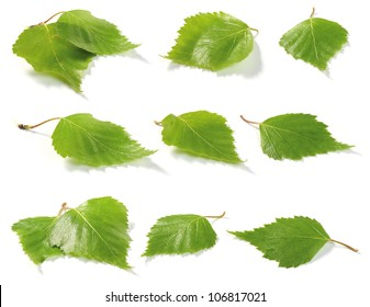 Green birch tree leaves. Isolated on white background. Shallow depth of field.