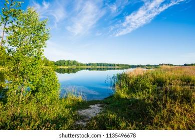 Green birch trees near the lake on a sunny summer day, Latvia