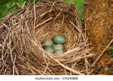 Green bird eggs