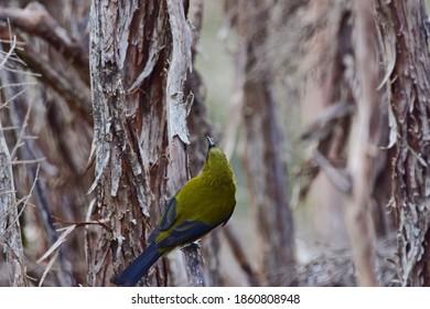 Grüner Vogel, der auf dem Baum mit Insekten auf den Schnürsenkeln hängt