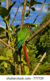 green bird in tree