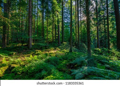 In the green Black Forest / Schwarzwald in Germany on a sunny, summer day