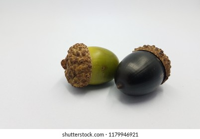 green and black oak tree acorn seeds on white background