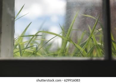 Green blades of grass seen through a basement window.