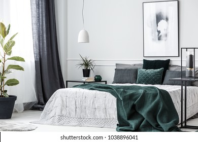 Green blanket on bed in elegant bedroom interior with poster on white wall and plant on the table