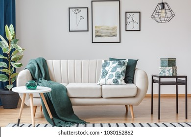 Green blanket on settee near ficus and table in bright living room interior with gallery of posters