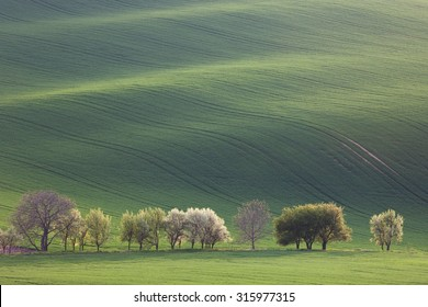 Green and Blossom Trees overlooking rolling hills with fields in sunset light suitable for backgrounds or wallpapers, natural minimalism landscape, South Moravia, Europe