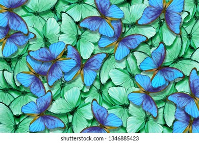 Green and blue butterflies morpho texture background. Natural pattern. Flight of butterflies abstract background.