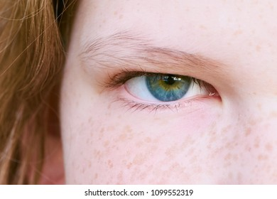 Green blue girl's eye close up, with freckles