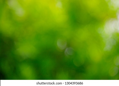 Green blur background and texture