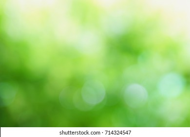 green blurred background of green leaves